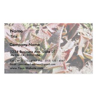 Cactus del cactus plantillas de tarjeta de negocio