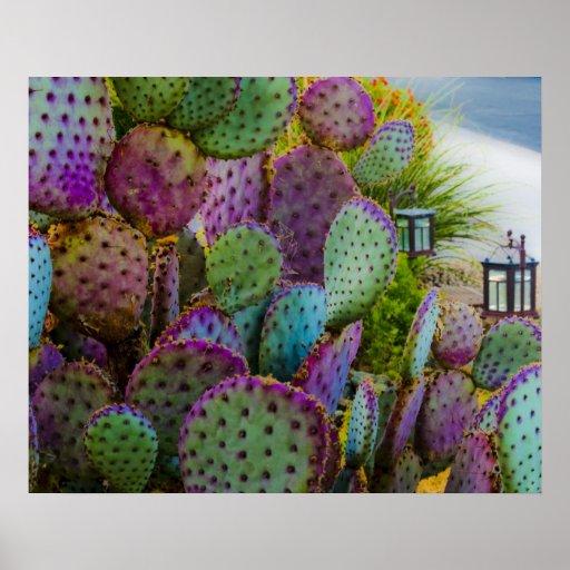 Cactus del caramelo poster