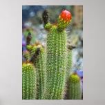 Cactus del color impresiones