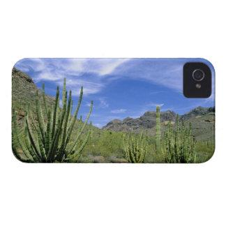 Cactus del desierto en el monumento nacional del iPhone 4 Case-Mate carcasa