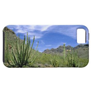 Cactus del desierto en el monumento nacional del iPhone 5 carcasa