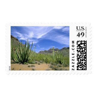 Cactus del desierto en el monumento nacional del envio