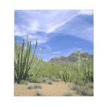 Cactus del desierto en el monumento nacional del t blocs de notas