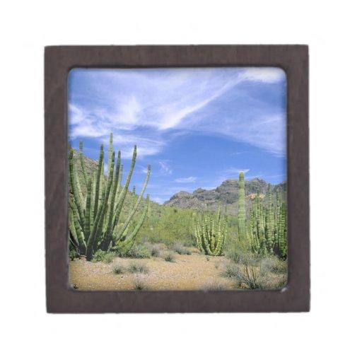 Cactus del desierto en el monumento nacional del t caja de recuerdo de calidad