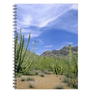 Cactus del desierto en el monumento nacional del t libro de apuntes
