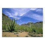 Cactus del desierto en el monumento nacional del t felicitación