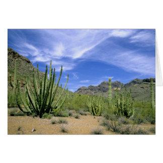 Cactus del desierto en el monumento nacional del t tarjeta de felicitación