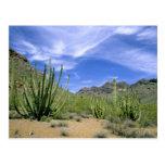 Cactus del desierto en el monumento nacional del postal