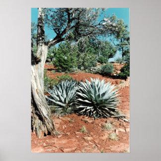 Cactus del desierto póster