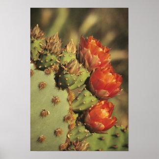 Cactus del higo chumbo en la floración, Arizona-So Impresiones