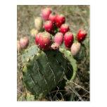 Cactus del higo chumbo en Tejas Postales