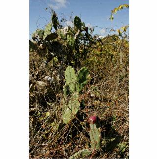 Cactus del higo chumbo fotoescultura vertical