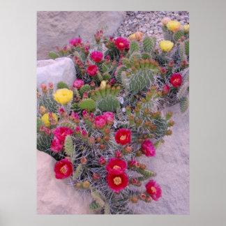 Cactus del higo chumbo poster