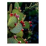 Cactus del higo chumbo postal