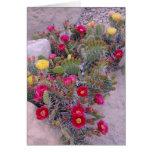 Cactus del higo chumbo tarjeta