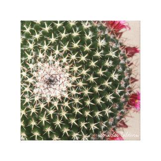 Cactus del Mammillaria en la floración Impresiones De Lienzo
