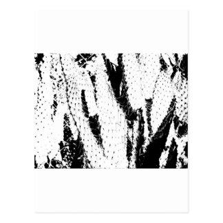 Cactus del oído de elefante en blanco y negro postales