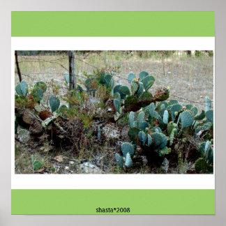 cactus del país de la colina de Tejas Póster