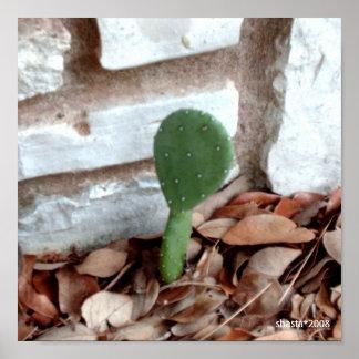 cactus del país de la colina del lil impresiones