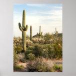 Cactus del Saguaro, Arizona, los E.E.U.U. Póster