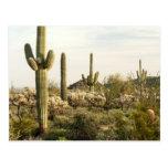 Cactus del Saguaro, Arizona, los E.E.U.U. Tarjeta Postal