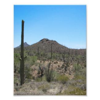 Cactus del Saguaro - desierto de Sonoran Cojinete