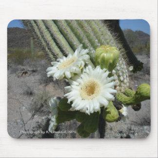 Cactus del Saguaro en la floración Mousepad