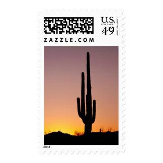 Cactus del Saguaro en la puesta del sol Envio