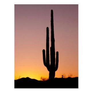 Cactus del Saguaro en la puesta del sol Tarjetas Postales
