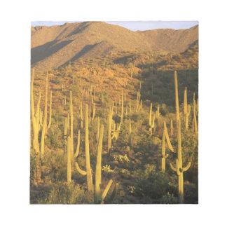 Cactus del Saguaro en parque nacional de Saguaro c Bloc De Notas