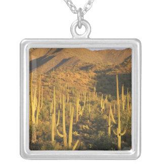 Cactus del Saguaro en parque nacional de Saguaro Colgante Cuadrado