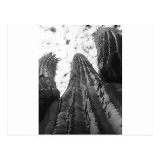 Cactus del Saguaro, fotografía infrarroja Postal