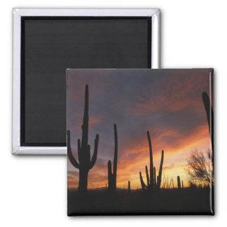 cactus del saguaro, gigantea del Carnegiea, despué Imán