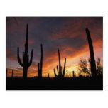 cactus del saguaro, gigantea del Carnegiea, Tarjetas Postales
