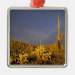cactus del saguaro, gigantea del Carnegiea, y Adorno Cuadrado Plateado