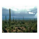 Cactus del Saguaro Tarjeta Postal