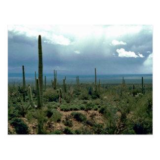 Cactus del Saguaro Postal