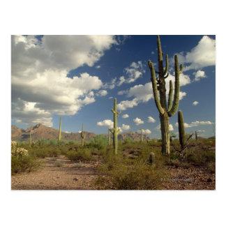 Cactus del Saguaro y montaña de Río. Tubo de Oraga Tarjeta Postal