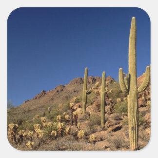 Cactus del Saguaro y montañas de Tucson, Tucson Pegatina Cuadrada
