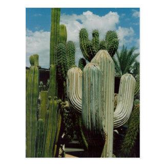 Cactus del sudoeste tarjeta postal