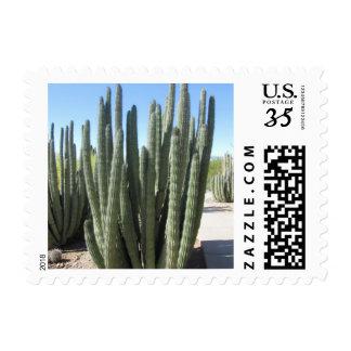 Cactus del tubo de órgano franqueo