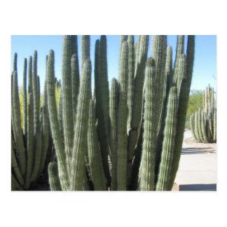 Cactus del tubo de órgano tarjetas postales