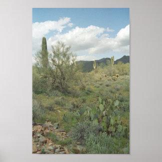 Cactus Desert Coloring Photograph Art Print Poster
