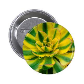 Cactus Design Button
