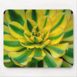 Cactus Design Mouse Pad