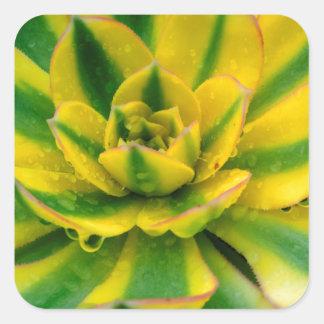 Cactus Design Square Sticker