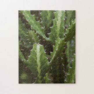 Cactus (difficult) jigsaw puzzle