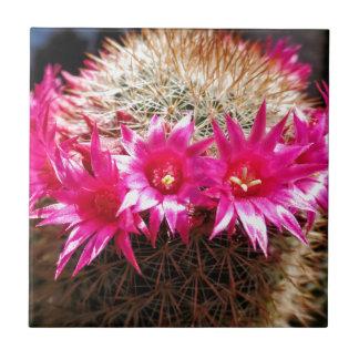 ¡Cactus dirigido rojo del irlandés, Azulejo Cuadrado Pequeño