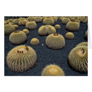 Cactus, echinocactus grusonii card