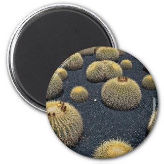 Cactus, echinocactus grusonii fridge magnets